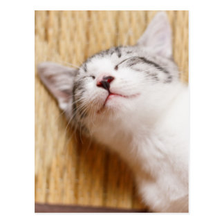 Sleeping Kitten On Tatami Mat Postcard