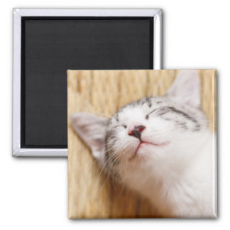 Sleeping Kitten On Tatami Mat Square Magnet