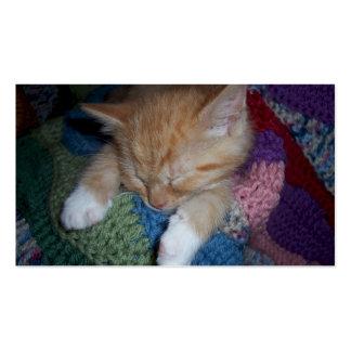 Sleeping Kitten Pack Of Standard Business Cards