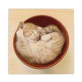 Sleeping Kitten Wood Coaster