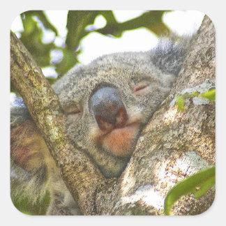 Sleeping Koala Bear Sticker