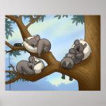 Sleeping Koala Poster