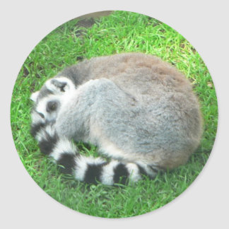 Sleeping Lemur On Grass Classic Round Sticker