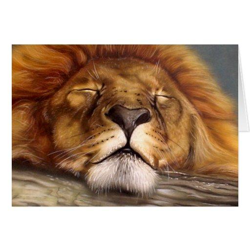 Sleeping Lion Greeting Cards