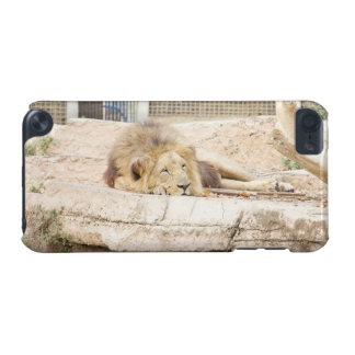 Sleeping Lion iPod Touch (5th Generation) Cases