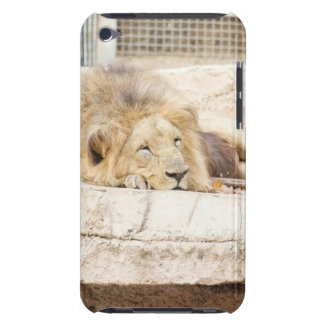 Sleeping Lion iPod Touch Cover