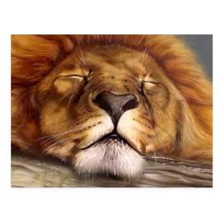 Sleeping Lion Postcard