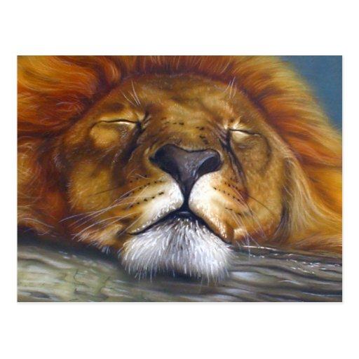 Sleeping Lion Post Card