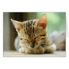 Sleeping Little Baby Kitty