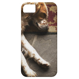Sleeping Llewelyn setter Barely There iPhone 5 Case