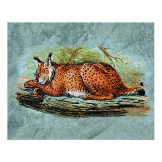 Sleeping Lynx Illustration Posters