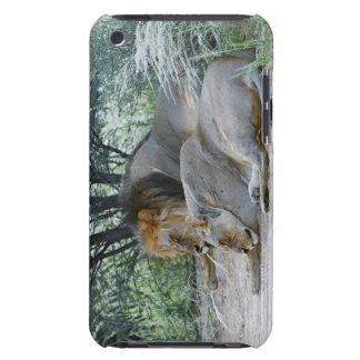 sleeping male lion and lioness, Panthera leo, iPod Touch Case