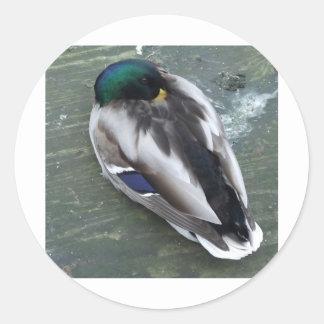 Sleeping Mallard Round Sticker