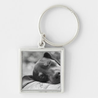 Sleeping Miniature Pinscher dog Key Ring
