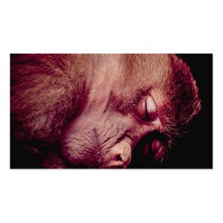 Sleeping monkey business cards