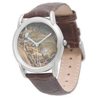 Sleeping Mountain Lion Watch