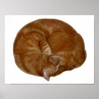 Sleeping Orange Cat Poster
