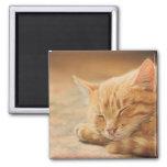 Sleeping Orange Tabby Cat Fridge Magnet