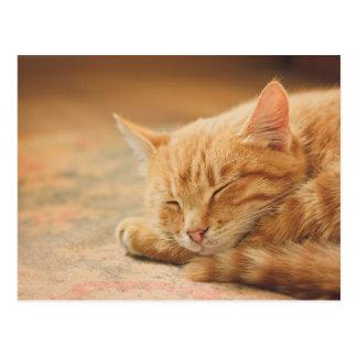 Sleeping Orange Tabby Cat Postcard