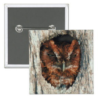 Sleeping Owl in a Tree 15 Cm Square Badge