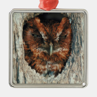 Sleeping Owl in a Tree Christmas Ornament