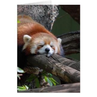 Sleeping Panda Bear  Greeting Card
