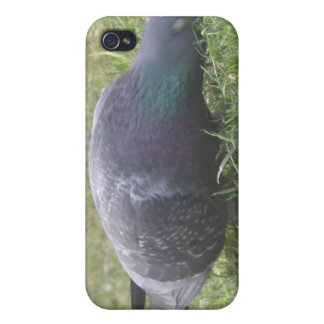 Sleeping Pigeon  Case For The iPhone 4