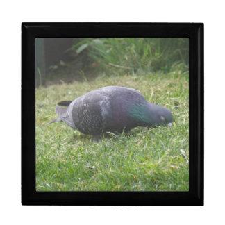 Sleeping Pigeon Gift Box