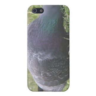 Sleeping Pigeon iPhone 4 Case