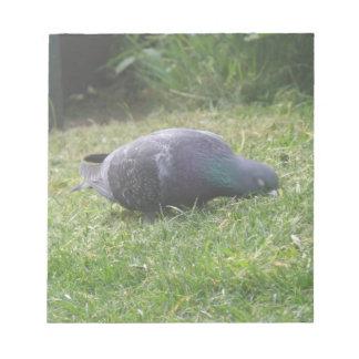 Sleeping Pigeon Notepad