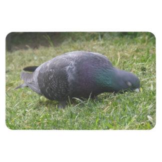 Sleeping Pigeon Premium Magnet