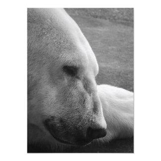 Sleeping Polar Bear 14 Cm X 19 Cm Invitation Card