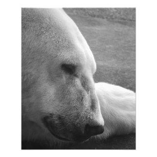 Sleeping Polarbear Custom Flyer