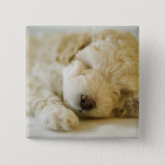 Sleeping Poodle puppy 2 15 Cm Square Badge