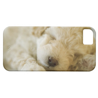 Sleeping Poodle puppy 2 Case For The iPhone 5