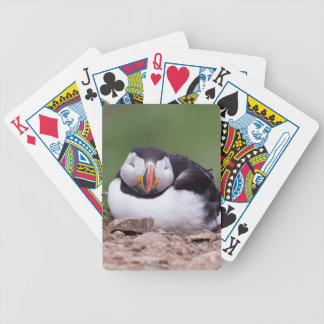 Sleeping Puffin Deck Of Cards