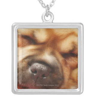 Sleeping Pugalier Puppy Close up Silver Plated Necklace