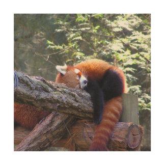 Sleeping Red Panda Wood Print