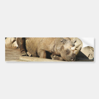 Sleeping Rhino Bumper Sticker