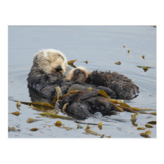 Sleeping sea otter mum and pup postcard