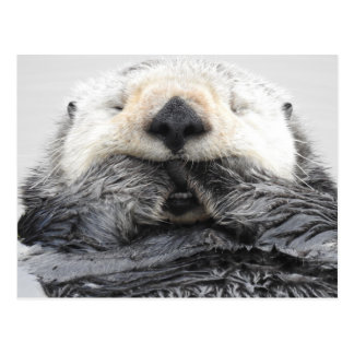 Sleeping Sea Otter Postcard