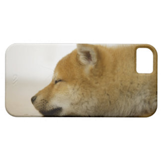 Sleeping Shiba-ken 2 Barely There iPhone 5 Case