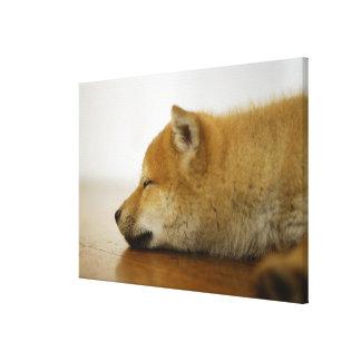 Sleeping Shiba-ken 2 Canvas Print