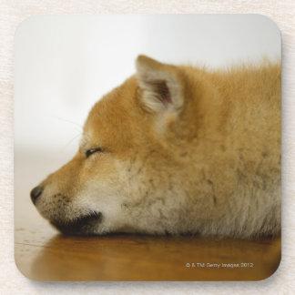Sleeping Shiba-ken 2 Drink Coasters