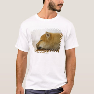 Sleeping Shiba-ken 2 T-Shirt