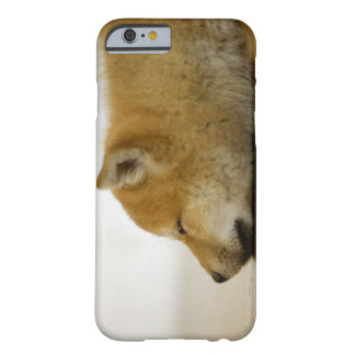 Sleeping Shiba-ken 3 Barely There iPhone 6 Case