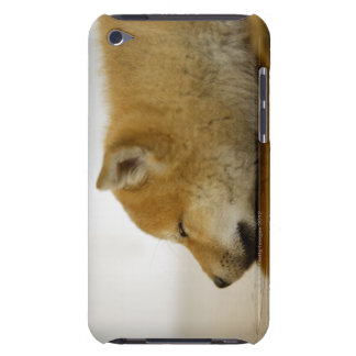 Sleeping Shiba-ken 3 Barely There iPod Cases