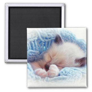 Sleeping Siamese Kitten Paws Square Magnet