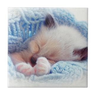 Sleeping Siamese Kitten Paws Tile