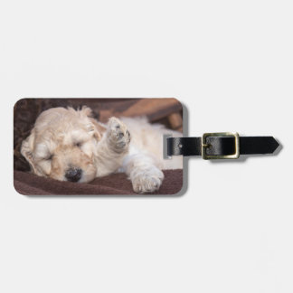 Sleeping Standard Poodle puppy Luggage Tag